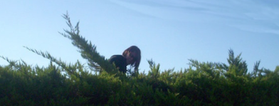 hedgehedge